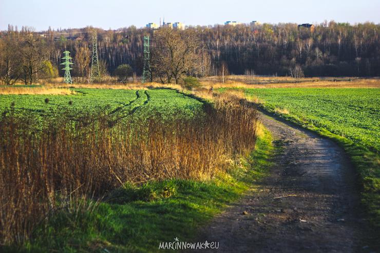 Fazaniec szombierki pola